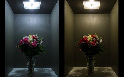 G8 LED Bulb, 36 High Power