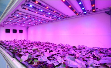 Image of: Led Grow Light Bulbs