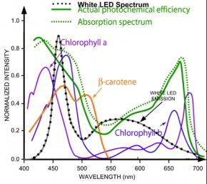 Light Absorption Spectrum for flowers